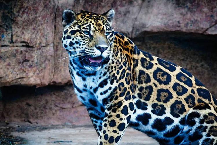 長沙生態動物園2