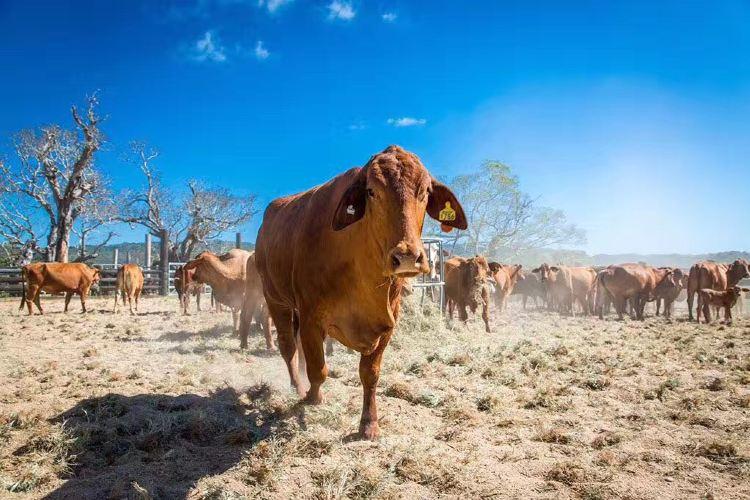 Kur-Cow Barnwell Farm1
