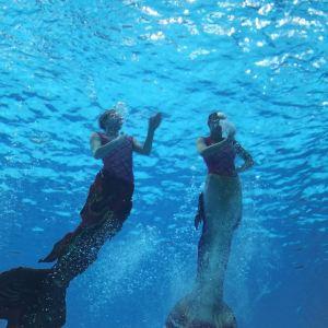美人鱼表演《人鱼童话》旅游景点攻略图