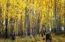 金秋季节,我们一路向北,呼伦贝尔大兴安岭的秋天原来如此的美丽~