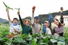 盘点日本可以体验农活的民宿