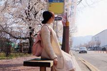 韩国赏樱花好地点,人少,出大片~