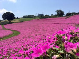 Furano,Recommendations