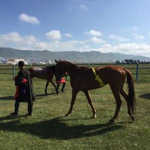 河南蒙古族自治县游记图文-愿做一匹却达,奔跑在美丽的草原