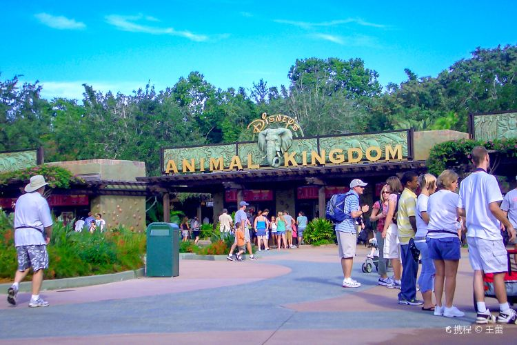 Disney Animal Kingdom1