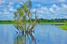 澳洲北领地卡卡杜国家公园随拍