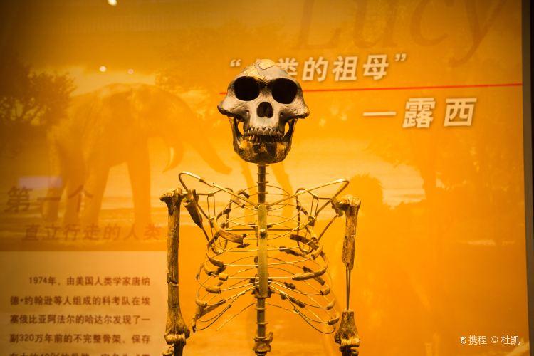 Tianjin Natural History Museum4