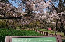 台灣八大景點之阿里山