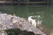 趣说鸭伉俪、青蛙王子和龟老儿