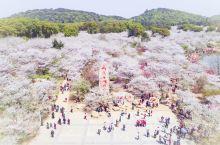赏樱不止在日本,去这些地方,你一样能遇见一座粉色天堂!
