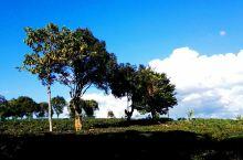 普洱茶的故乡——勐海          西双版纳州勐海县,中国普洱茶原产地,茶马古道的起点。普洱茶如