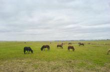 科尔沁草原上的现代牧民