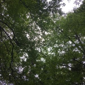 桐子坳旅游景点攻略图