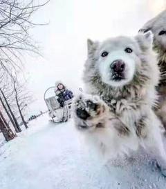 [哈尔滨游记图片] 驴友必看:哈尔滨、亚布力滑雪、雪乡旅行攻略实用篇
