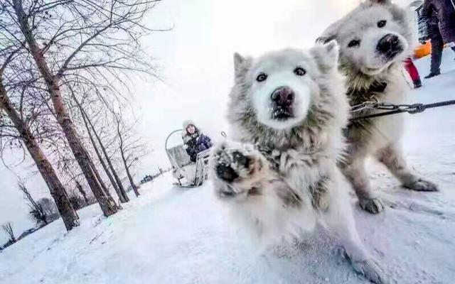 驴友必看:哈尔滨、亚布力滑雪、雪乡旅行攻略实用篇