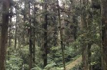 樹木參天🗻
