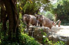 神奇动物在这里!——广州长隆2日发现之旅
