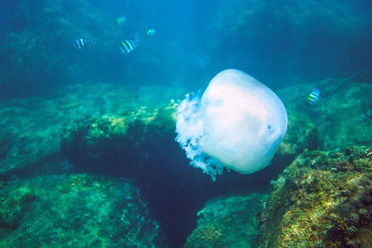 우즈저우섬 다이빙지역2