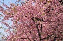 早春的植物园