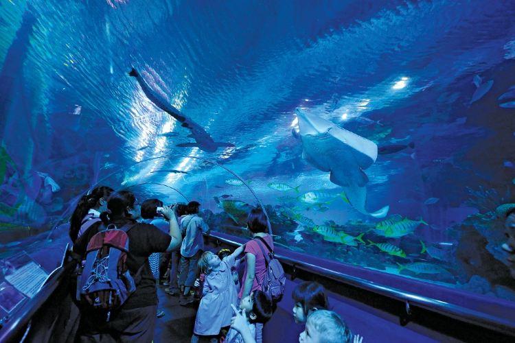 吉隆坡城中城水族館2