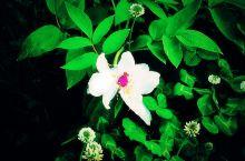 我有一朵花花与你共享