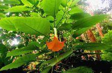 琅勃拉邦的丛林公园