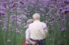5月的福州是被上帝宠坏的地方!1万㎡紫色马鞭草,许你一个家门口的普罗旺斯!