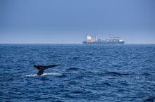 亭可马里:北纬8度听蓝鲸在唱歌