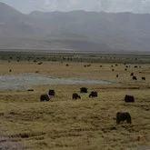 草原八塔旅游景点攻略图