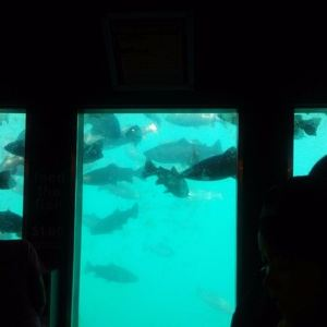 皇后镇海底世界旅游景点攻略图
