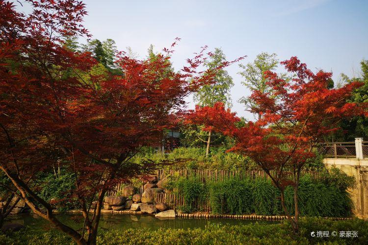 Anji Bamboo Expo Park4