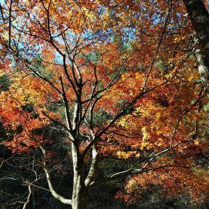 桃花冲森林公园旅游景点攻略图