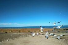 美丽的青海湖!