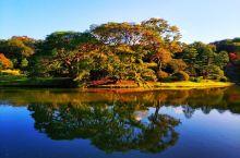 慢慢游箱根、镰仓6天详细散策,东京3大公园美图
