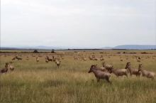 肯尼亚看迁徙,请跟龙人走