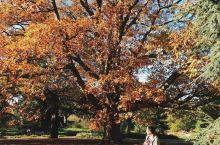 伦敦的秋天