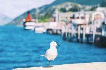新西兰旅行,爱上皇后镇