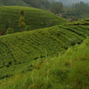 Mackwoods茶厂旅游景点攻略图