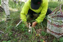 阿尔山蘑菇