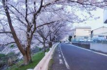佐保川,安静的樱花之旅
