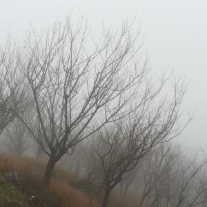 丹山赤水旅游景点攻略图