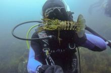 在洛杉矶潜水抓龙虾是什么样的体验?