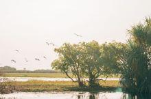 #向往的生活#海鸟与鱼相爱,在卡卡杜就是一场意外。