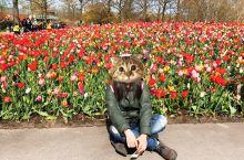 领略荷兰的后花园——库肯霍夫公园