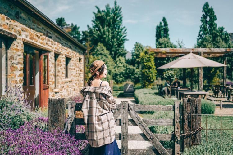Wanaka Lavender Farm4