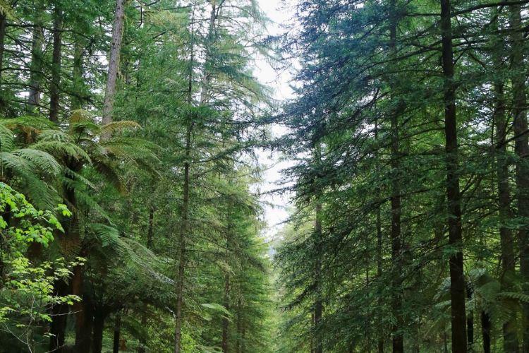 The Redwoods4