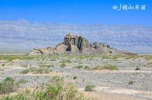 风光|去新疆寻找千年胡杨树,吸一吸千年灵气