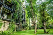 丹布拉国宝级酒店推荐|Kandalama:躺在大自然里的酒店