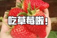 草莓控注意了!青岛好吃的草莓都在这了,赶紧约起来!