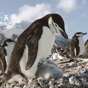 北极游记图文-和BBC度过神奇的一天,感受生存与爱